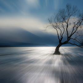That Wanaka Tree by Bren Dyer - Nature Up Close Trees & Bushes ( water, tree, lake, that wanaka tree, lake wanaka )