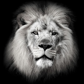 The Lonely King  by Abbey Gatto - Black & White Animals