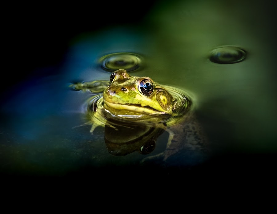 by Adam Mudge - Novices Only Wildlife