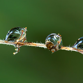 THREE DROP OF DEW by Bambang Charli - Abstract Water Drops & Splashes