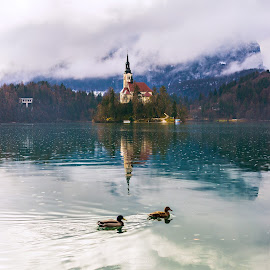 Bled by Srdjan Vujmilovic - Landscapes Waterscapes ( water, mountains, reflection, sky, nature, church, fog, outdoor, ducks, lake, landscape, island )