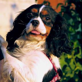Tockica by Mario Novak - Animals - Dogs Portraits
