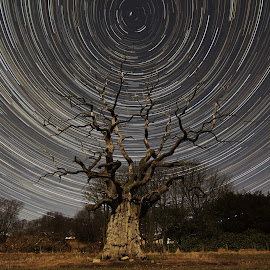 Pitfour Tree Trail by Steven McCarron - Novices Only Landscapes ( scotland, night photography, tree, lake, star trails )