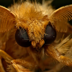Monster face by Prana Jagannatha - Animals Insects & Spiders ( wildlife, insects )