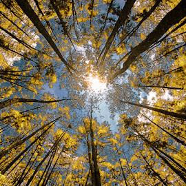 kuning jarrr by Muhammad Fakhriannur - Landscapes Forests