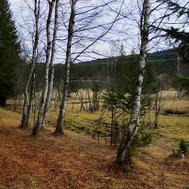 by Martin Kostohryz - Landscapes Forests ( příroda, les, hory, šumava, podzim )