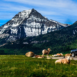 Rocky Mountains  by Joseph Law - Landscapes Mountains & Hills