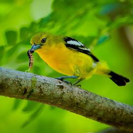 by Simon Yue - Animals Birds