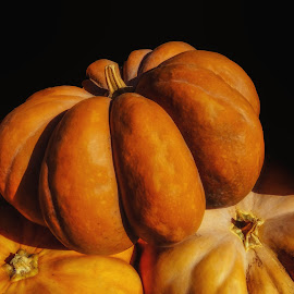 Big Orance Pumpkn by Dave Walters - Nature Up Close Gardens & Produce ( pumpkins, nature, garden, colors, fall harvest )