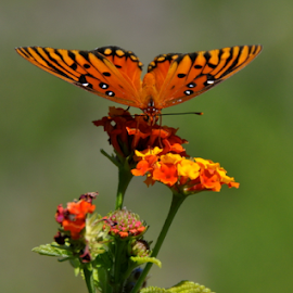 Butterfly V by Dave Feldkamp - Nature Up Close Other plants ( butterfly, orange, green, yellow,  )