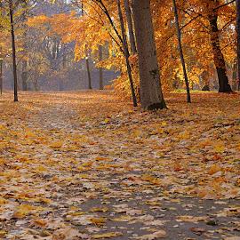 by Vida Jankaitiene - City,  Street & Park  City Parks