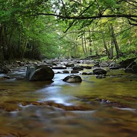 by Siniša Almaši - Landscapes Forests ( water, up close, reflection, stream, nature, colors, trees, forest, stones, landscape, light, rocks, woods, depth, river )