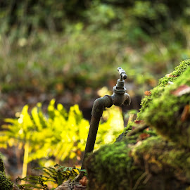 The Tap In The Wood by James Johnstone - Artistic Objects Other Objects ( wood, moss, tap, ferns, gallaberry )