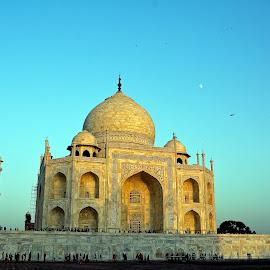 The Taj by Asif Bora - Buildings & Architecture Public & Historical