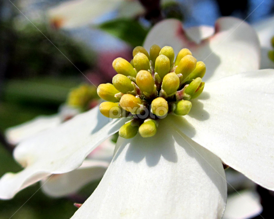 Full Bloom by Jenelle Trader - Nature Up Close Flowers - 2011-2013 ( macro, nature, green, seed, white, flower )