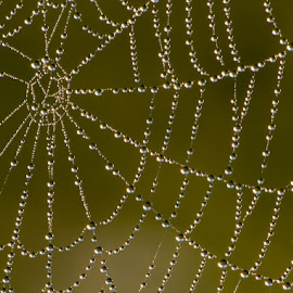 Dewdrops by Warren Wilson - Nature Up Close Webs