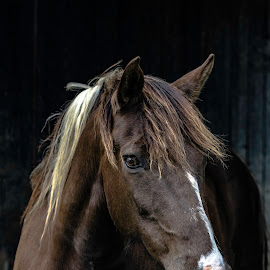 by Jackie Nix - Animals Horses ( mare, face, vertical, equine, equis, herbivore, mane, horse, agriculture, farm animal, beauty )