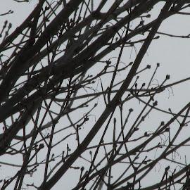 Spooky by Debra Grosskopf - Novices Only Wildlife