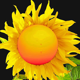 Sun In The Flower by Will McNamee - Digital Art Things ( dld3us@aol.com, gigart@aol.com, aundiram@msn.com, danielmcnamee@comcast.net, mcnamee2169@yahoo.com, ronmead179@comcast.net,  )