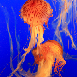 by Alex Pozon - Animals Sea Creatures