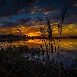 Reflections sunset by Tim Hancock - Landscapes Sunsets & Sunrises ( water, sky, grass, sunset, everglades )