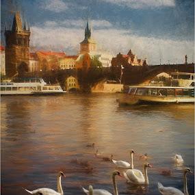 by Stephen Hooton - Uncategorized All Uncategorized ( czech republic )