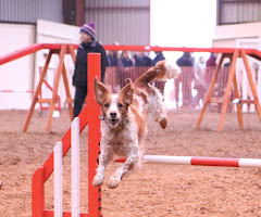 A dog jumping during a dog show