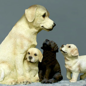 Canine Love 1 by RMC Rochester - Digital Art Animals ( abstract, animals, dogs, colors, random,  )