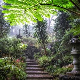 Lush Madeira by Katarina Farelius - Nature Up Close Gardens & Produce ( #jardimtropical #madeira #funchal #lush #tropical #garden )