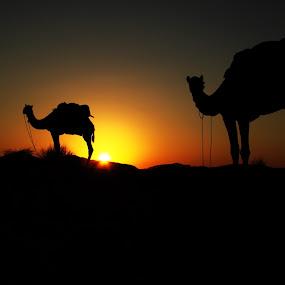 Pushkar, India by Jon Harris - Landscapes Travel