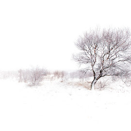 The Lone Tree by John Walton - Black & White Landscapes ( #snow, #heritagefocus, #tree )