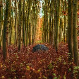 Autumn colors by Krešimir Prskalo - Nature Up Close Trees & Bushes ( wood, autumn leaves, nature, autumn, autumn colors )