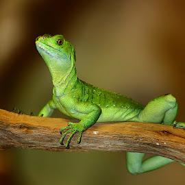 Sur la branche by Gérard CHATENET - Animals Reptiles