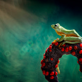 frog, morning by Sulistyo Aji - Uncategorized All Uncategorized ( naturelovers, natural light, macro, nature, nature and wildlife, indonesia, nature up close, nature photography, nature close up, natural, natural beauty, nature photo )