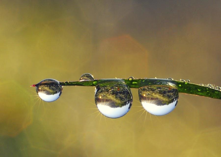 Dews by Muhamad Lazim - Nature Up Close Natural Waterdrops ( macro, dew )