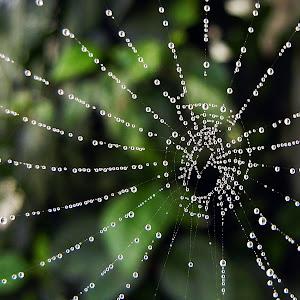 SpiderArt.JPG