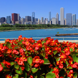 Chicago Flowers by Charles Kuster - City,  Street & Park  Skylines ( skyline, chicago, flowers )