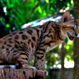 by Neni Wijaya - Animals - Cats Playing