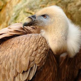 Moine by Gérard CHATENET - Animals Birds
