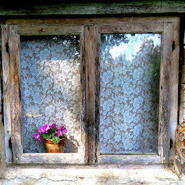 Old Window And A Lilac Flower by Mārīte Ramša - Buildings & Architecture Architectural Detail