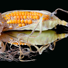 Maize by SANGEETA MENA  - Food & Drink Fruits & Vegetables