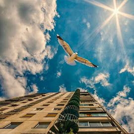 by Vladimir Jablanov - City,  Street & Park  Street Scenes