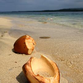 Coconuts by Geoffrey Wols - Landscapes Beaches ( water, sand, vanuatu, coconut, beach, paradise, tropics )