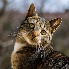 by Stanley P. - Animals - Cats Portraits