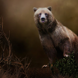 Gots Some Fruit? by Davandra Cribbie - Digital Art Animals ( grizzly, bear, canadian grizzly, photo manipulation, digital art, animal )