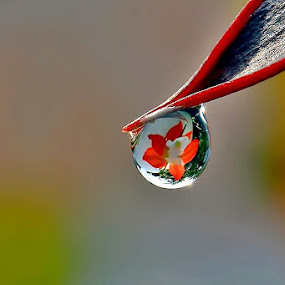 Cling in the Dew by Heru S. Tyon - Nature Up Close Other plants