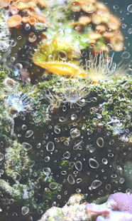 Fishing Coral Reef Photo LWP - screenshot
