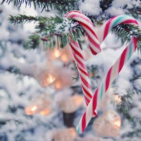 ~♥~ by Viktorija Golubić - Public Holidays Christmas