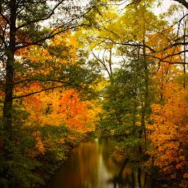 Autumn Ulvsunda Stockholm Sweden... by Johan Dubois - Landscapes Forests
