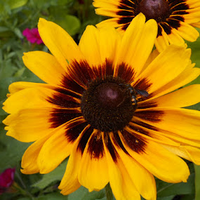 Beautiful Flower by David Jarrard - Flowers Single Flower ( single flower, contest, yellow flower,  )